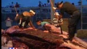 Reprise de la chasse à la baleine au Japon