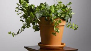 Pas évident de trouver une solution pour arroser ses plantes pendant les vacances.