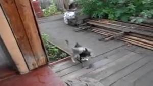 Quand un chien oblige un chat à rentrer chez lui