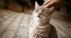 Les chats ont maintenant leurs hôtels au même titre que les humains.