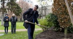 Manuel Valls le 16 décembre plante un chêne dans le jardin de matignon