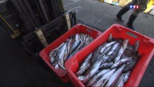 Le 13 heures du 15 août 2014 : March�'Arcachon : des poissons frais r�lent les touristes - 1359.8490000000002