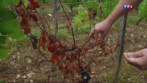 Le 13 heures du 29 juillet 2015 : Les vignes du Jura - 236