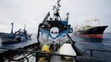 Antarctique : nouveaux conflits entre baleiniers japonais et Sea Shepherd