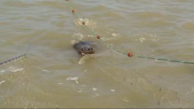 Le 20 heures du 16 septembre 2014 : Environnement : les phoques envahissent la C�d%u2019Opale - 2086.6875308837893