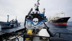 Un baleinier japonais a foncé sur des bateaux de Sea Shepherd