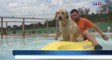 Le 13 heures du 15 août 2014 : Espagne, un aquaparc canin accueille le meilleur ami de l'homme - 1602.7252415771486