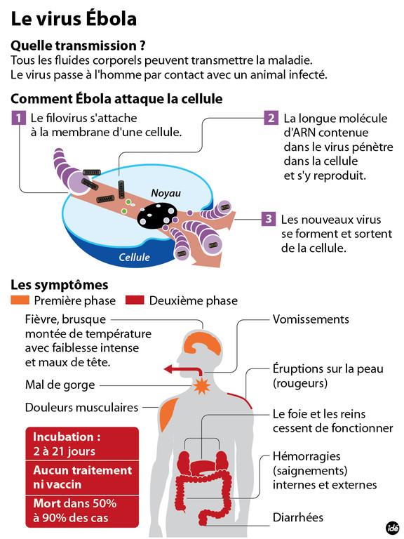 Comment se transmet le virus Ebola.