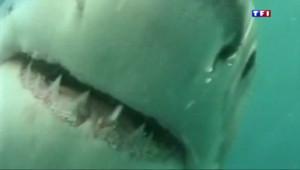 Le 20 heures du 24 avril 2015 : La Réunion relance la traque aux requins - 1158.648