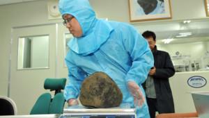 Un scientifique étudie une météorite (une chondrite) tombée dans le sud de la Corée du Sud en mars 2014.