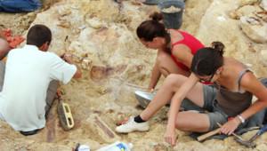 Paléontologie : chantier de fouilles à Velaux, près d'Aix-en-Provence (23 août 2012)