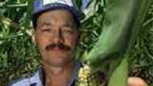 maïs OGM champ agriculture