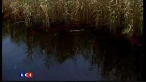 La nappe de pétrôle atteint la Louisiane