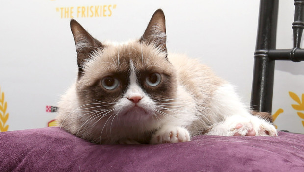 """Grumpy Cat"", un chat grincheux dont la valeur a été estimée à 1 million de dollars."