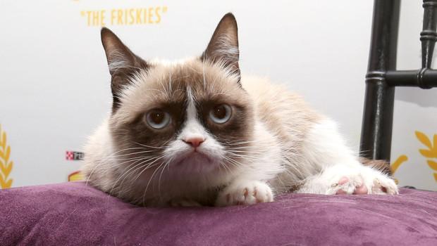 """""""Grumpy Cat"""", un chat grincheux dont la valeur a été estimée à 1 million de dollars."""
