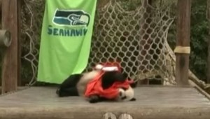 panda le le superbowl