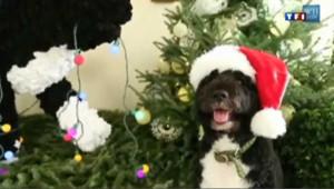 Bo, le chien des Obama dans un clip vidéo pour Noël