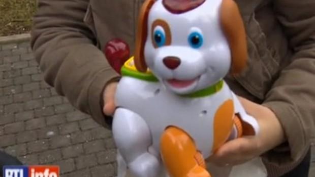voici-le-fautif-le-petit-chien-bobby-108