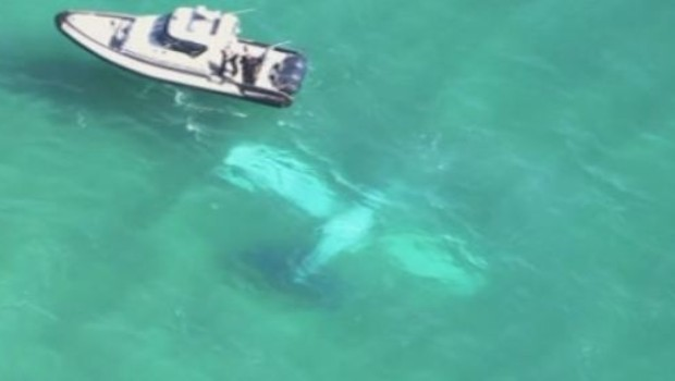 crash d'un avion près des côtes de Miami