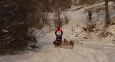 Le 13 heures du 21 janvier 2015 : La Grande Odyssée, course de chiens de traineaux, touche à sa fin - 1616.239