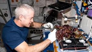 Un ingénieur de la Nasa travaillant sur la culture de salades dans l'espace