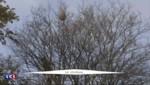 Le frelon asiatique s'installe progressivement en France et à Paris