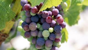 Les vins de millésime 2009