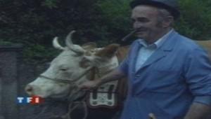 Une manifestation de vaches pour légaliser le port de la cloche.