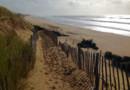 Jusqu'au 17 janvier, les habitants de l'Ile de Ré, sont incités à déposer leurs sapins sur les plages. Et c'est utile : ils servent à consolider les dunes de sable.