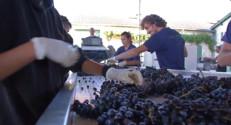 Le 13 heures du 30 octobre 2014 : Le vin bio s%u2019installe chez les producteurs prestigieux - 1592.2798218994146