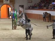 Le 20 heures du 2 mars 2015 : A la découverte de l'Ecole royale andalouse d'Art équestre, l'une des meilleures au monde - 1896.8919559326173