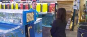 Les poissons phosphorescents, nouvelles stars des aquariums