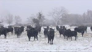 Le 20 heures du 3 février 2015 : En Camargue, dans l'Hérault, en Corse%u2026 les plaines aussi sont sous la neige - 115.89119174194335