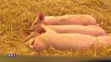 Salon de l'agriculture : compilation des meilleurs moments