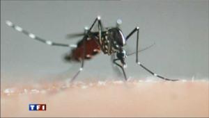 Un cas de dengue dans les Alpes-Maritimes