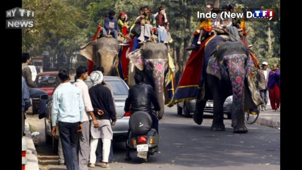 Cambodge : un éléphant meurt d'épuisement après avoir transporté trop de touristes