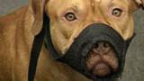 Hérault : un enfant de trois ans grièvement mordu par un chien