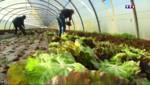 Dans les Bouches-du-Rhône la salade pique sa crise