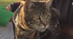 Tara, la chatte héroïne.