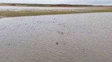En Angleterre, une armée de requins a envahi une plage