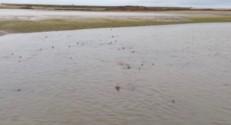 Une armée de requins envahit cette plage anglaise