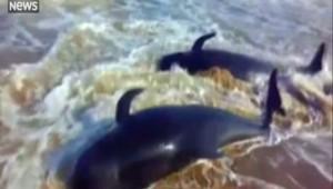 Au moins 45 baleines retrouvées mortes échouées en Inde