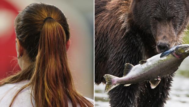 Queue de cheval et saumon pêché par un ours (montage)