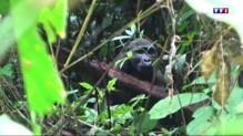 Dipikar, l'île aux gorilles