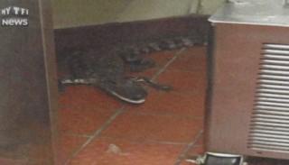 Pour faire une blague, il jette un alligator par la fenêtre d'un fast-food