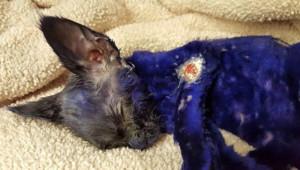 Smurf a été retrouvé dans un carton avec des chiffons violet et des pelures de citron.