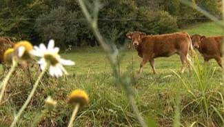 vache lait agriculture champs bucolique campagne