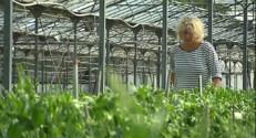 Le 20 heures du 20 septembre 2014 : Intemp�es : des d�ts consid�bles pour les horticulteurs et mara�ers - 521.9179935302734