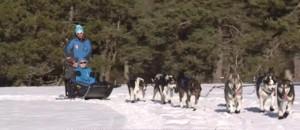 Lozère : embarquez dans un traineau guidé par des chiens