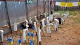 Ebola : l'OMS annonce un plan d'aide de 75 millions d'euros pour les pays touchés